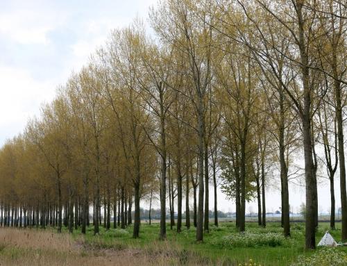 Bomenkap Kraaiennest opnieuw uitgesteld