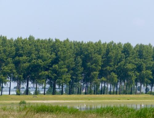 Alsnog bomenkap in Kraaiennest
