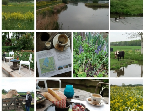 40 Ommetjes in Midden-Delfland